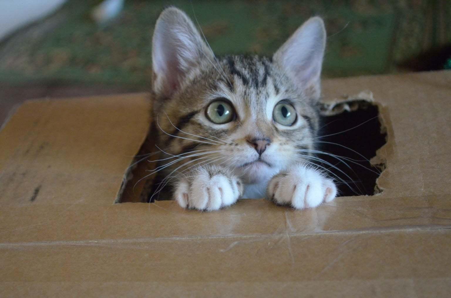 Problemas urinários em felinos