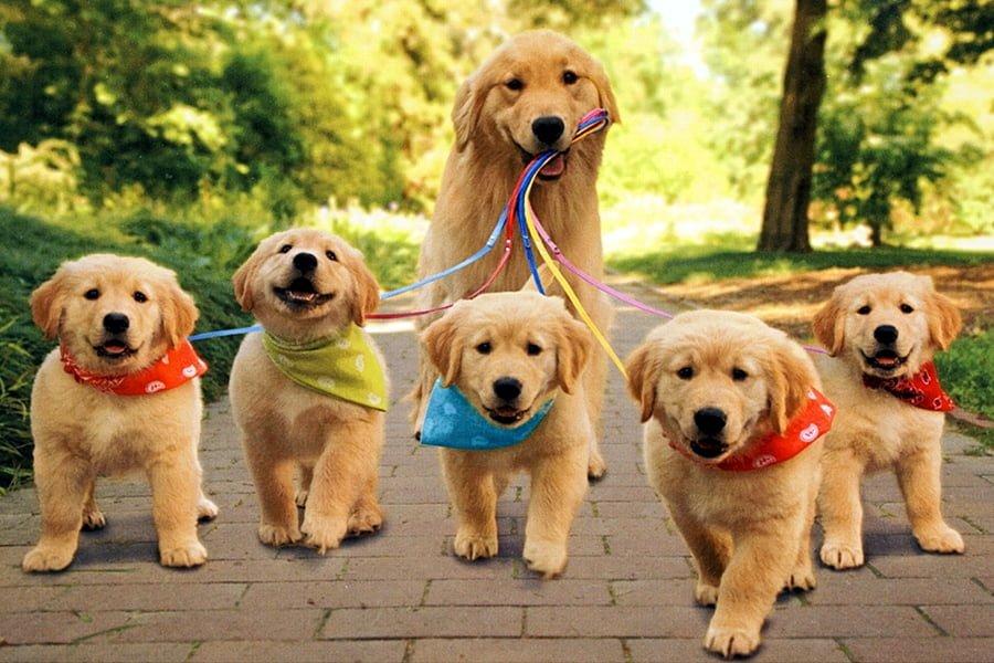 Castração em cães e gatos. Qual a sua importância?