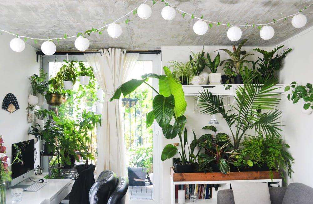 Urban Jungle – natureza na decoração!